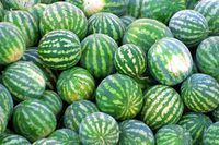 Each watermelon vine generally provides one to two melons for harvest.
