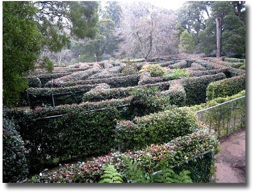 Skyhigh Maze at Mt Dandenong Melbourne Australia