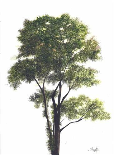 """Elm Tree"" - Original Fine Art for Sale - © Shweta Mahajan"