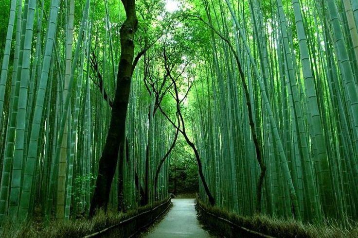 Bambù - IvanPerciballi.com