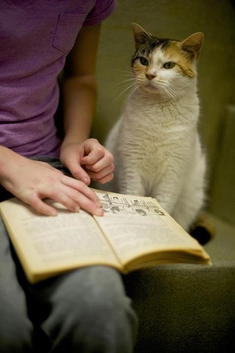 Crianças leem para gatos abandonados