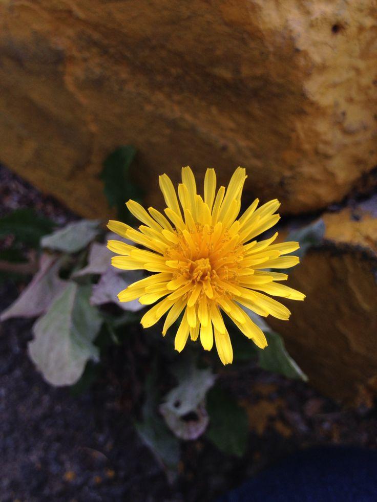 Yellow flower ✌️