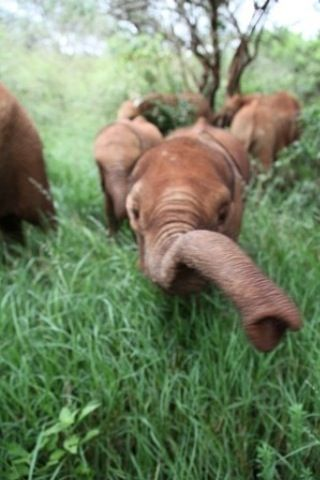 #facility #elephant #orphaned #thriving #hunting #rescue