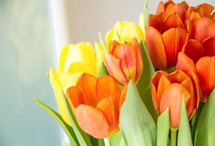 Hello Spring! - Instagram @Stadsblogger