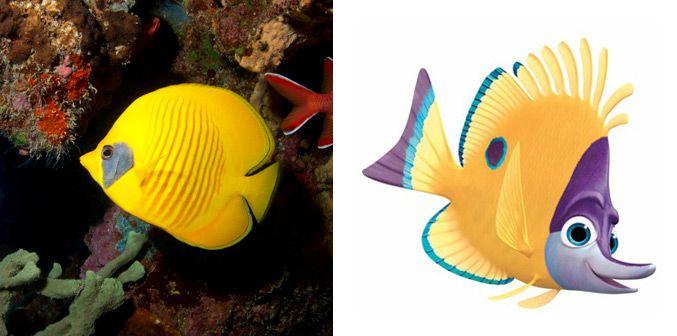 finding nemo fish