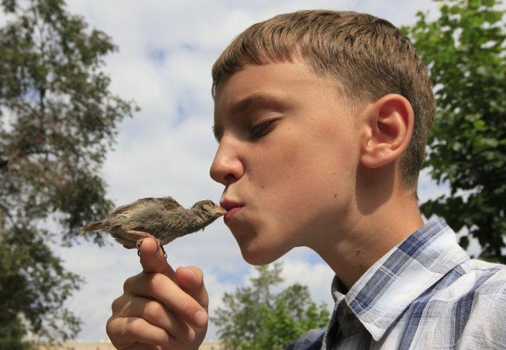 Vadim Veligurov, 12 anni, bacia il passerotto Abi, salvato lo scorso giugno dopo la caduta da un nido nella cittadina russa di Minusinsk e diventato in due mesi il migliore amico del ragazzo. Dopo essere stato curato il passerotto non è volato via ed è rimasto nell'abitazione della non