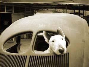 Bull Terrier in an old VW