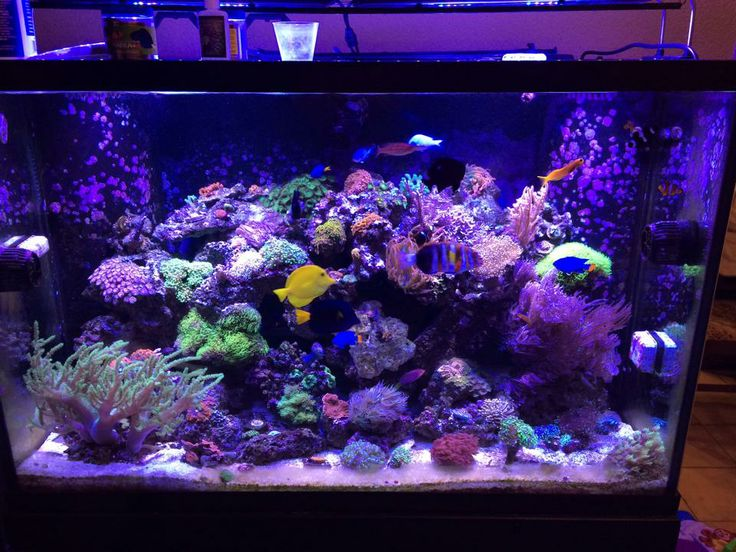 My 150 gallon reef sam bonahoom fishtankers for 50 gallon fish tank