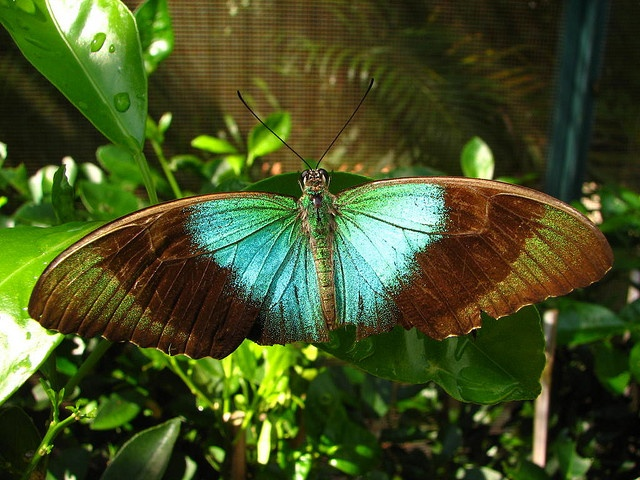 amazing butterfly