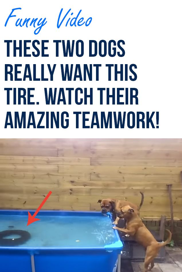 two dogs use amazing teamwork to get a tire teamwork