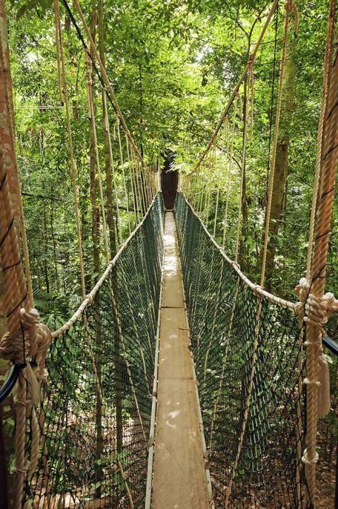 Puentes colgantes Taman Negara Malasia