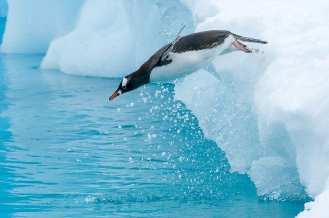 Travel To Antarctica – TravelMagma blog shown in 982738 blogs #flight #reservations http://travel.remmont.com/travel-to-antarctica-travelmagma-blog-shown-in-982738-blogs-flight-reservations/  #travel to antarctica # Travel To Antarctica Recently, I had a transition period between my jobs. I'm a travelling freak. Not a regular type, but in fact, I like to visit places that are somewhat inaccessible for a common man, or you can say places which are taboo to a majority of people. Some friends…