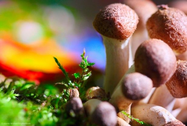 Originally on and inspired by Rachel Feltman ofWashington Post Psychedelic mushrooms are notorious for producing dazzling hallucinations. But they can do a lot more than provide you with a trip. New research shows that they actually have long-last positive effects on the brain. In fact, amind-altering compoundfound in some 200 species of mushroom isalready…