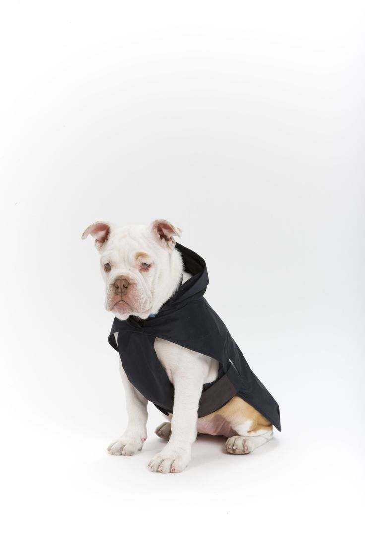 A rain coat for your dog from Mungo & Maud