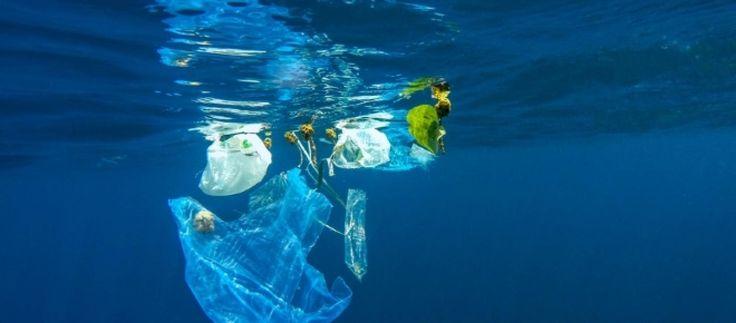 La falta de una cultura del reciclaje y el consumo desmedido del plástico están contaminando los oceános