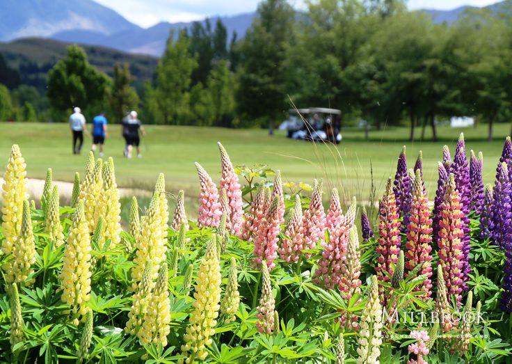 Enjoy a round of golf at Millbrook!