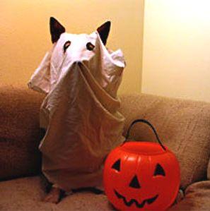 Zero - best dog costume ever!