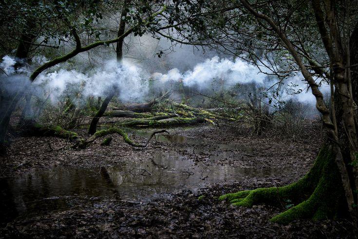 Ellie Davies: Between The Trees 9, 2014