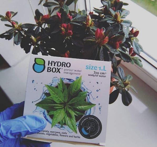 Hydrobox to idealne rozwiązanie dla azalii doniczkowej czy begonii. #hydrobxpl #hydrobox #kwiaty #azalia #nawadnianie #flowers #flower #planting #ogrod #dom #dekoracje #woda #diy #ideas
