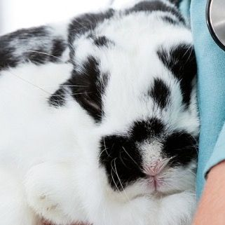 Why are so many rabbits unlucky? Our guide to rabbit care, and what's wrong.