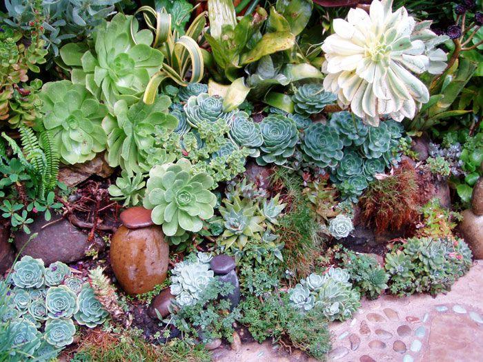 Delightful 138 Best California Garden Images On Pinterest   Succulents Garden, Gardens  And Plants