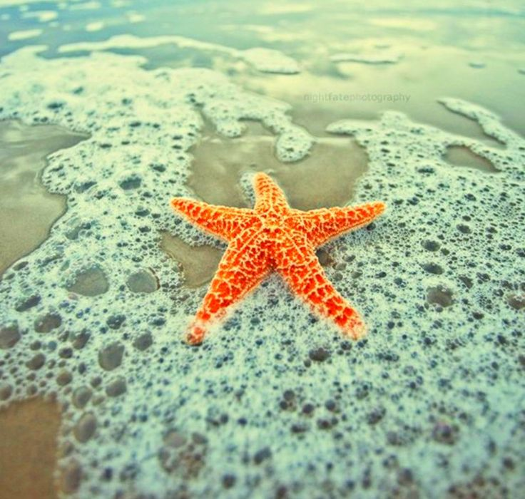 Starfish Facts
