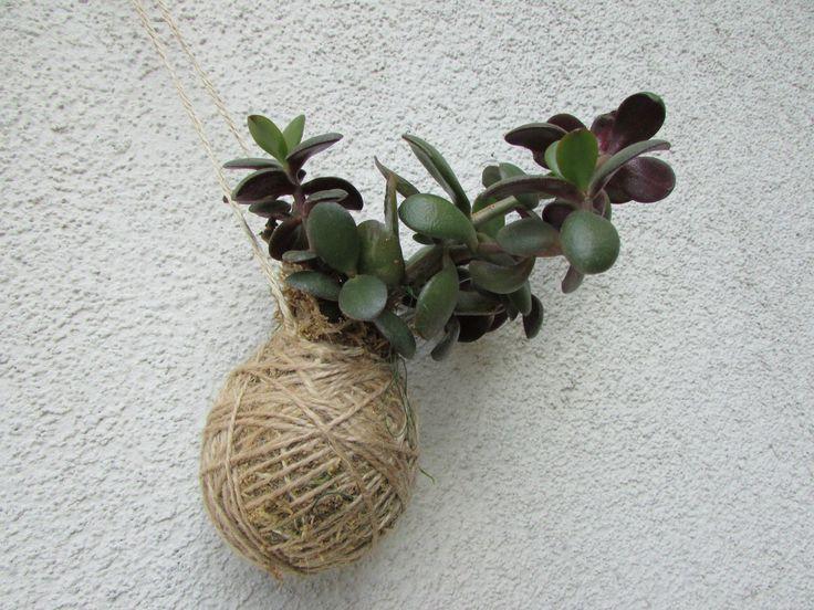 kokedamaTlustice+kokedama+pochází+jako+bonsaje+z+Japonska,+znamená+to+v+překladu+mechová+koule.+Jde+o+speciální+pěstování+pokojových+květin+v+závěsu+nebo+na+mističkách.+Podrobné+informace+o+kokedamě+najdete+v+mém+profilu.+vel.+balu+cca+8-12+cm,+s+možností+závěšení,+součástí+je+i+háček+cena+je+bez+misky+fotografie+je+ilustrační,+každá+kokedama+je+originál+Na...