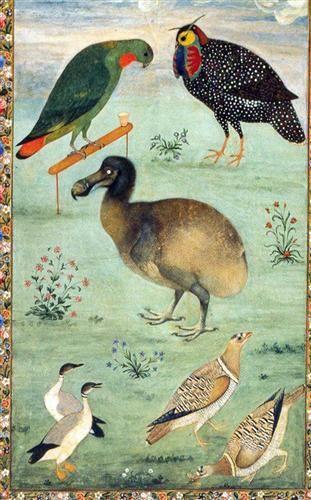 Untitled (Dodo) - Ustad Mansur