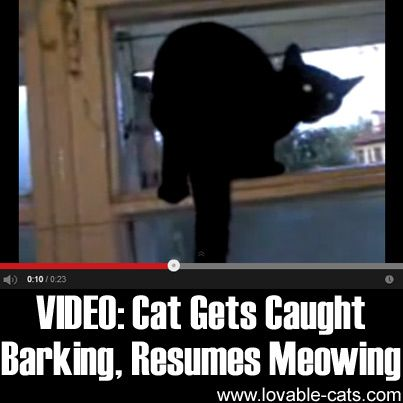 VIDEO Cat Gets Caught Barking, Resumes Meowing Funny