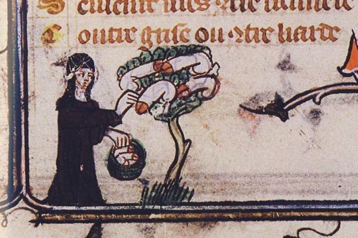 Door angstaanjagende verhalen over zwarte magie en vogelnesten vol penissen was de middeleeuwse man als de dood voor heksen.
