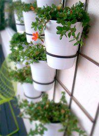 Ter um jardim vertical é seu sonho, mas você quer algo simples e fácil de cuidar? Confira a dica de hoje da coluna Jardins e Hortas