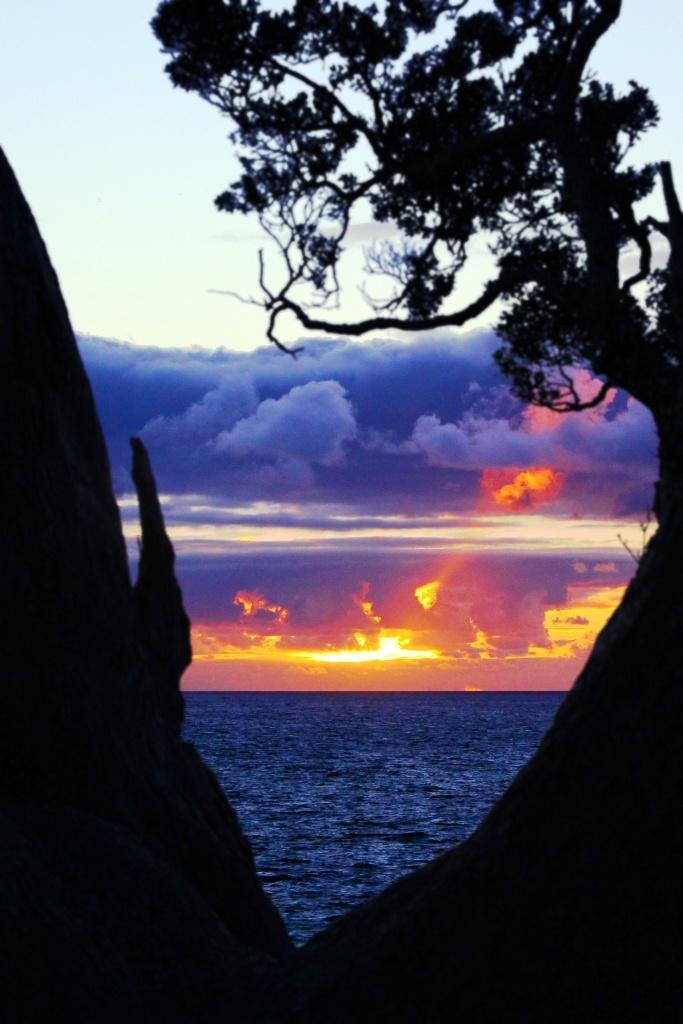 Sunrise through Tree - Hahei, New Zealand Beach, Summer, Ben Amies © 2012