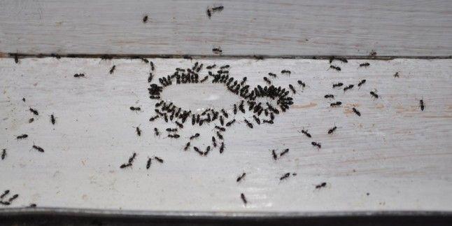 Karıncalardan Kurtulma Yolları