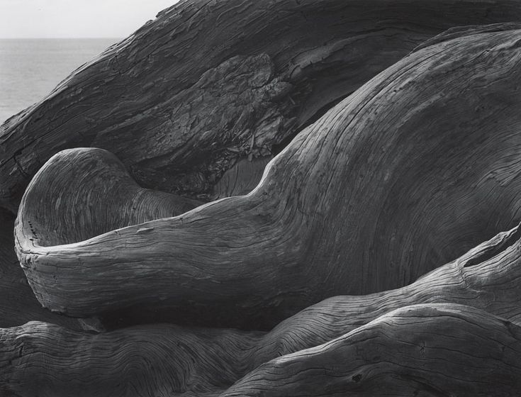 ANSEL ADAMS  1902 - 1984 Cypress Roots, Pebble Beach, California Date:	ca. 1978