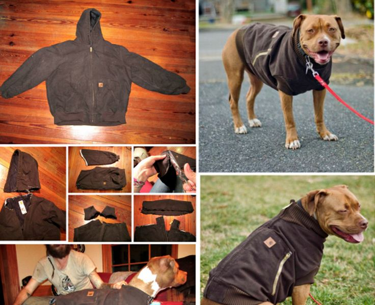 Turn your old hoodie into this fantastic dog coat for your furbaby.  Get the easy instructions now.