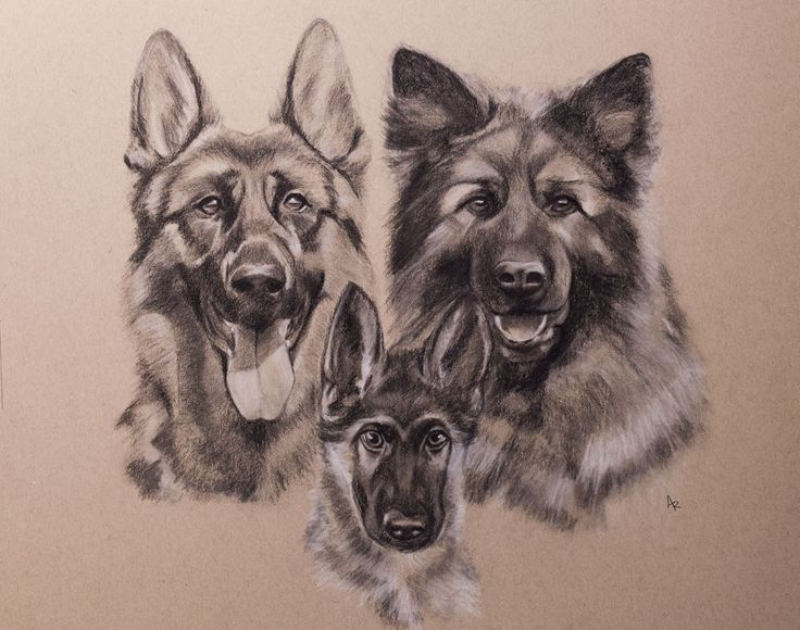 https://flic.kr/p/T4aHe4 | Rambo with mom and dad | Drawing by charcoal + white pencil on strathmore toned paper 41 x 51 cm 20 x 16 inch