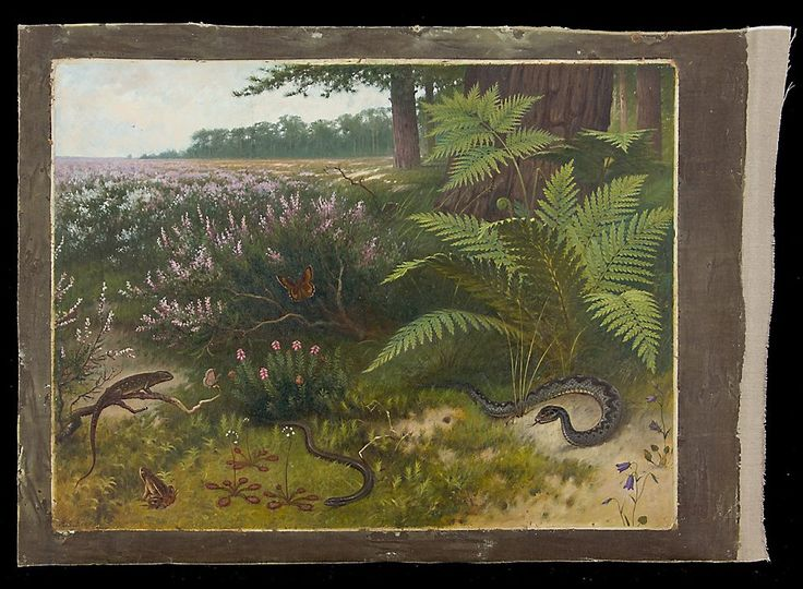 Reptiles I Schoolplaat Koekkoek