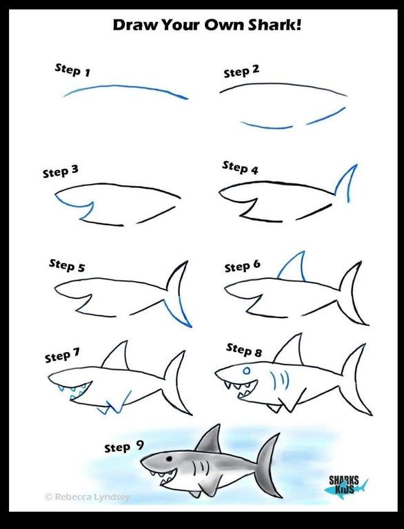 How To Draw A Shark In 9 Steps Coolguides Shark Drawing Easy Shark Drawing Shark Art