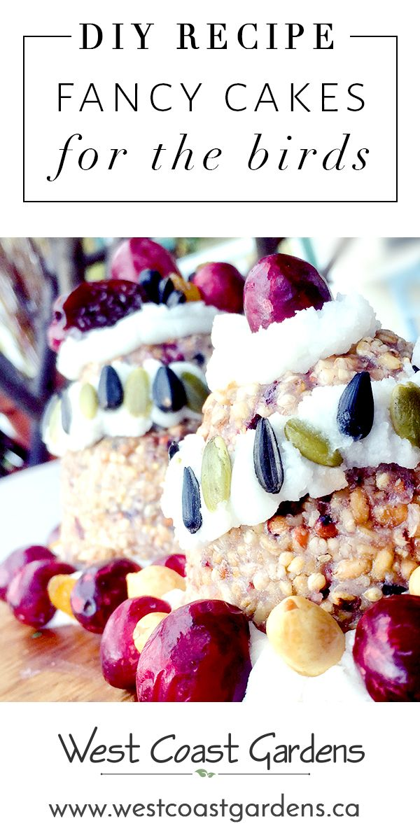Here's your chance to create a wild bird party for your feathered friends with our delicious and nutritious bird cake recipe snacks. See the full recipe on the blog! www.westcoastgardens.ca #bird #birdfood #garden #gardening #cakes #wildlife