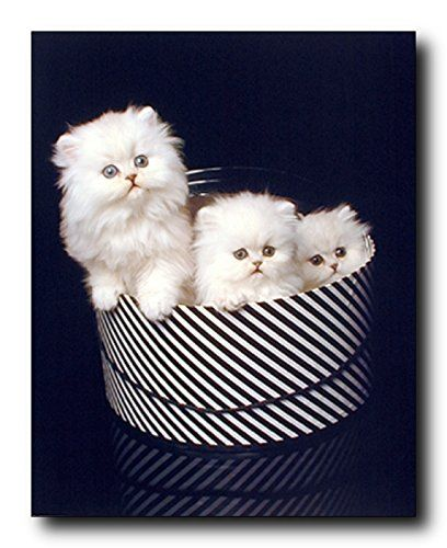 So Cute! This three cats sitting in a hat box artfully enhance the walls in your home and propagate your passion for your furry pets in an artful and educational way. It would give a cozy touch to your house and urn your room into a space that talks about you. Your heart will melt every time you look at it. So Hurry up and order this wonderful piece of art and enjoy your surroundings.