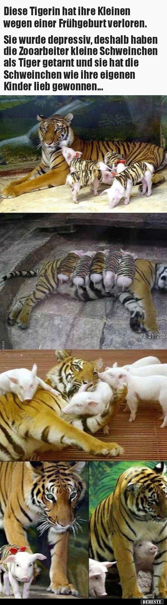 Diese Tigerin hat ihre Kleinen wegen einer Frühgeburt.. | Lustige Bilder, Sprüche, Witze, echt lustig – Sebastian Wawra