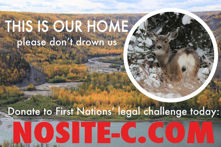 Injunction to stop work on #SiteC: $50,000. Protect Peace River eagles: priceless. Donate: http://ow.ly/R9mRh