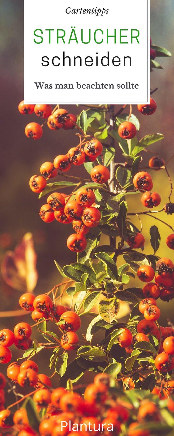 die besten 25 stauden ideen auf pinterest schattenspendende pflanzen hof und schattengarten. Black Bedroom Furniture Sets. Home Design Ideas