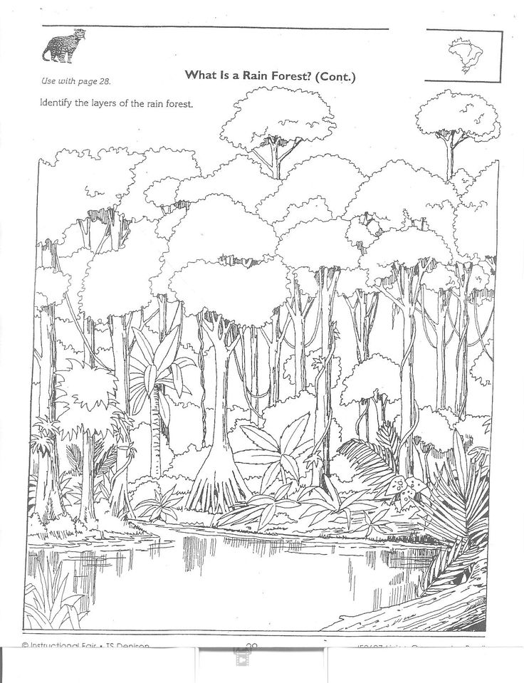 amazon rainforest coloring pages | Amazon Rainforest Packet (2).jpg (1264×1648) | coloring ...