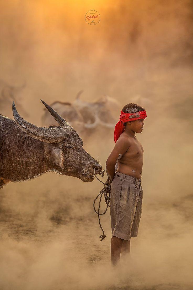 Buffalo boy, Nakhon Si Thammarat, Thailand