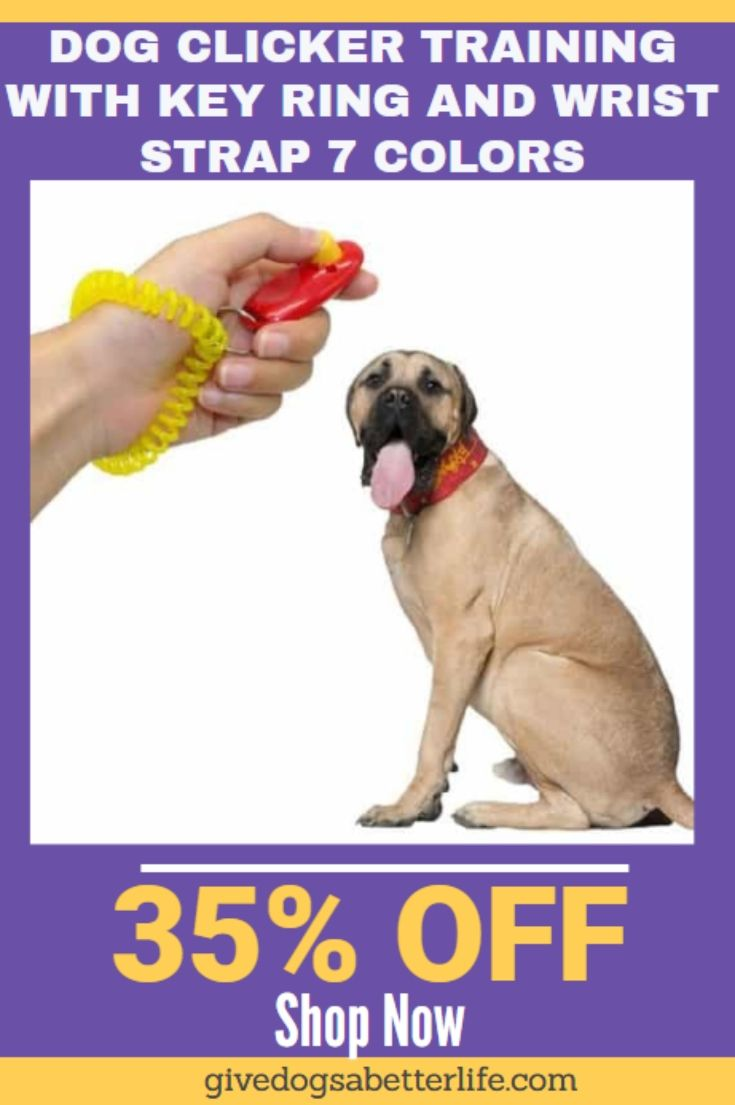 Dog Clicker Training With Key Ring And Wrist Strap 7 Colors Dog