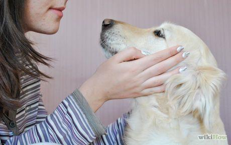 Become a Dog Trainer Step 1.jpg