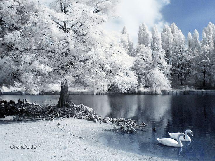 """500px / Photo """"Il lago dei Cigni"""" by GrenOuille"""