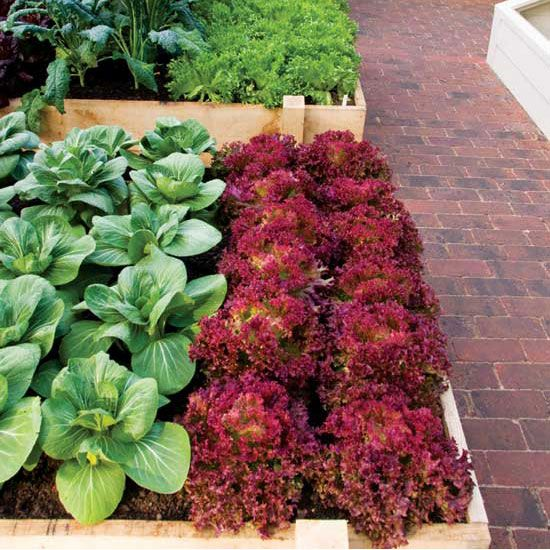 MOTHER Knows (Garden Planning) Best. Our online resources, directories and digital apps can make your garden planning a snap. From MOTHER EARTH NEWS magazine.