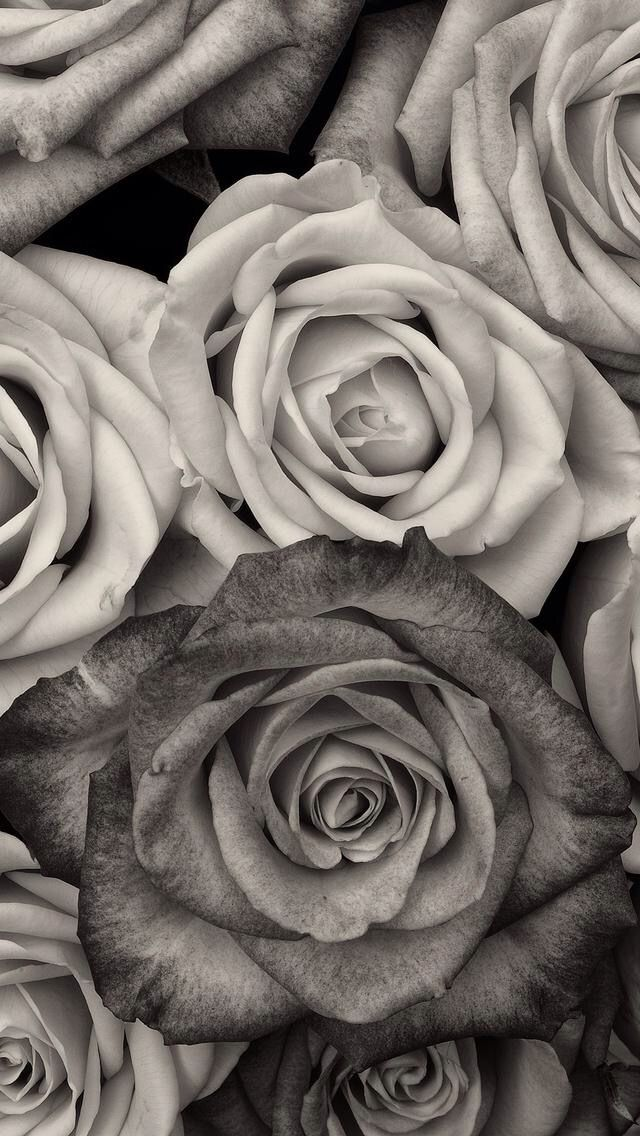 Black and white floral ~ wallpaper/background/lock screen